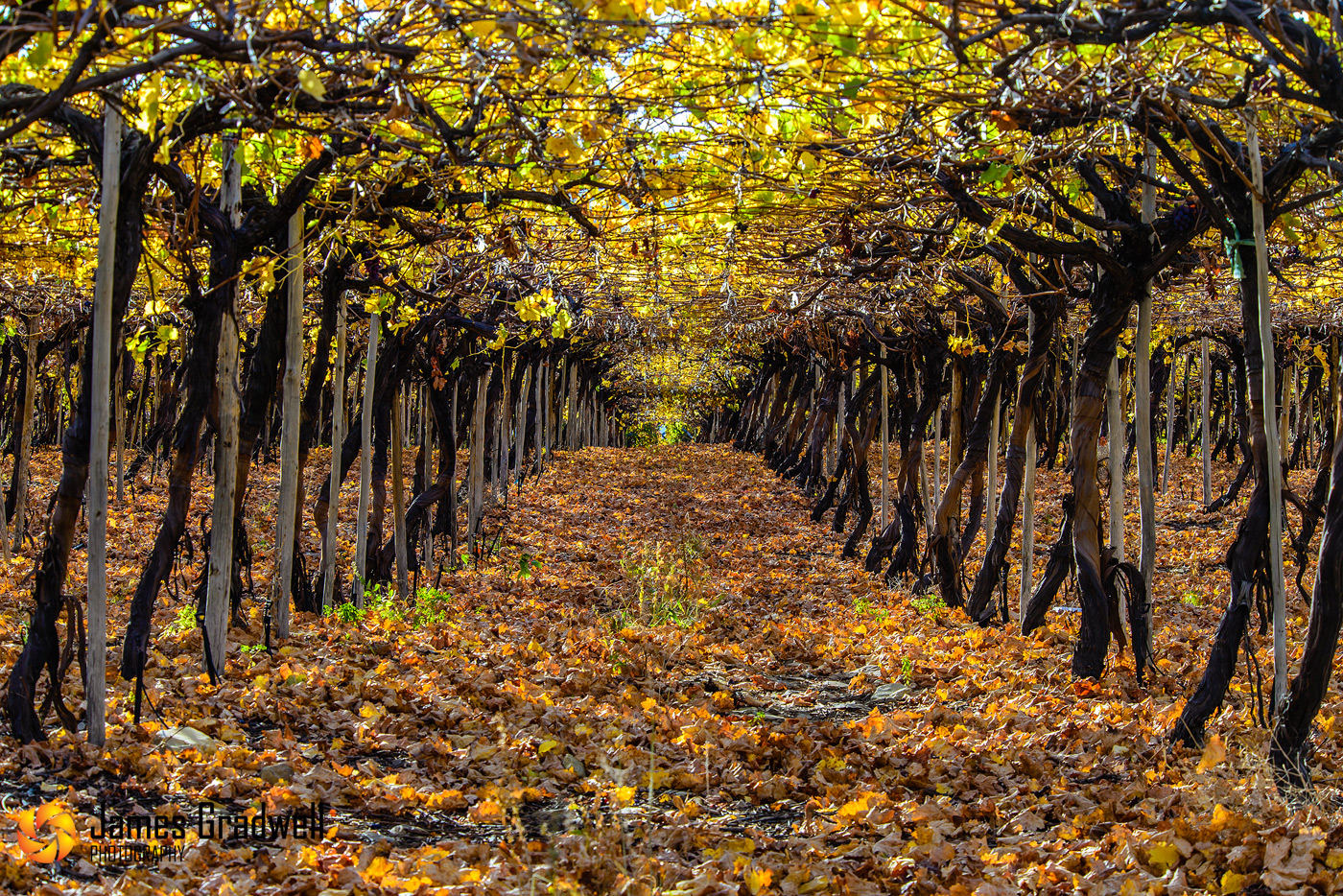 Cape Winelands in Autumn