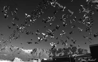 Pigeons and Table Mountain Photo Walk Cape Town City