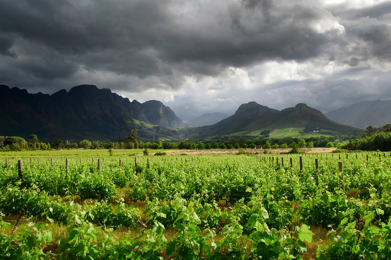 Franschoek wine region