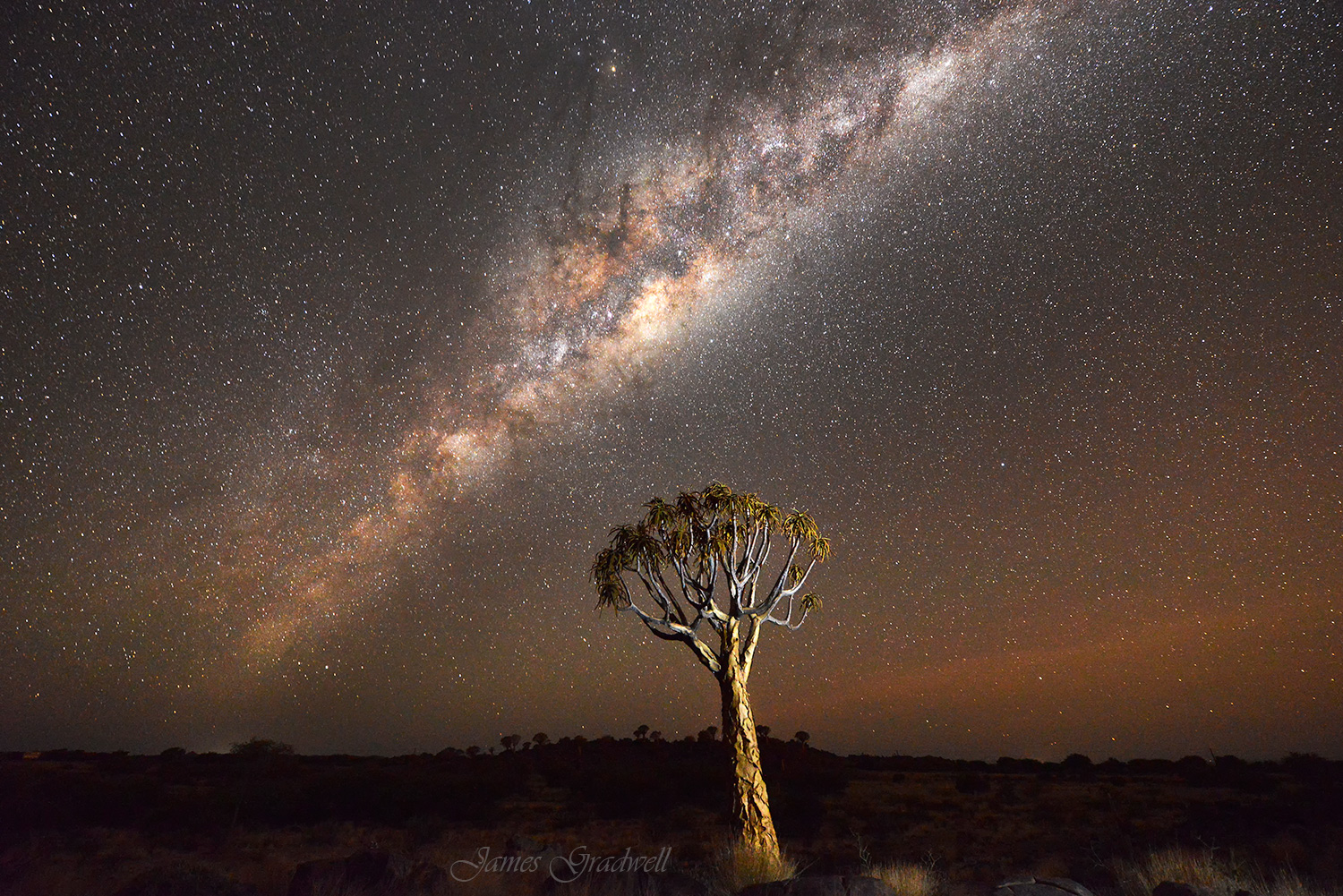 Quiver Tree Forest Night Sky