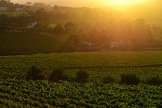 Sunrise over Stellenbosch