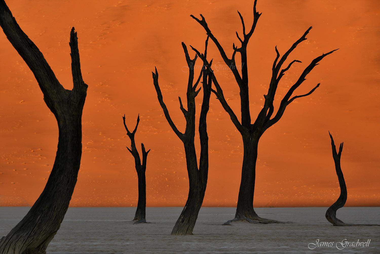 Sossusvlei Deadvlei Trees