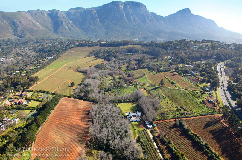 Aerial View Constantia Vineyards