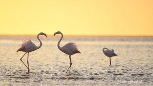 Walvis Bay Flamingos at sunset. Namibia Photo Tours
