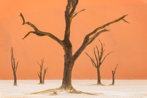 Amazing Skeletal Deadtrees at Deavlei Namibia Sossusvlei. Copyright James Gradwell