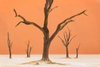 Amazing Skeletal Deadtrees at Deavlei Namibia Sossusvlei. Namibia photo tours