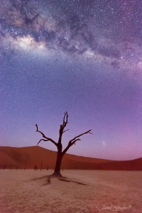 Milky Way and Tree Deadvlei Namibia. Copyright James Gradwell