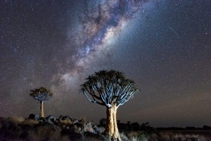 Quiver Tree Forest with Milky Way Namibia. Copyright James Gradwell