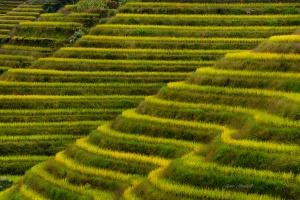 Longji Rice Terraces in Autumn. China Photo Tour