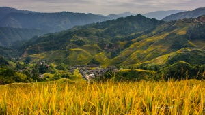 Longsheng Rice Terraces with town view Autumn. Photo Tour China