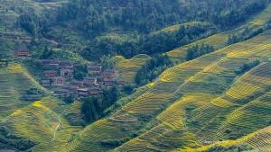 Longji Rice Terraces with town view Autumn. Photo Tour China