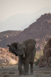 Desert Elephant Damaraland Photo Tour Namibia