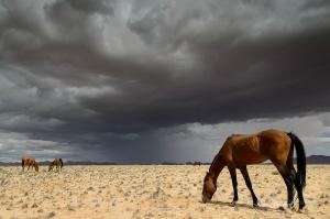 Wild Horses Of Aus Summer Storm Namibia. Copyright James Gradwell