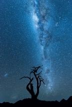 Milky Way Lone Tree Tirasberg Namibia. Namibia photo tours