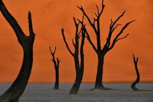 Beautiful Deadvlei Tree Sunrise. Namibia. Copyright James Gradwell