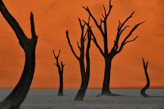 Beautiful Deadvlei Tree Sunrise. Namibia photo tours