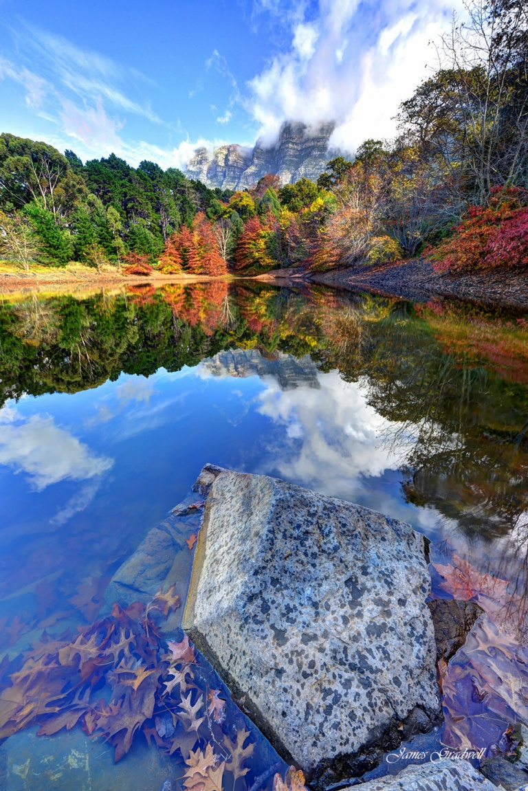 Green Forest Tranquility stock image. Image of reflection